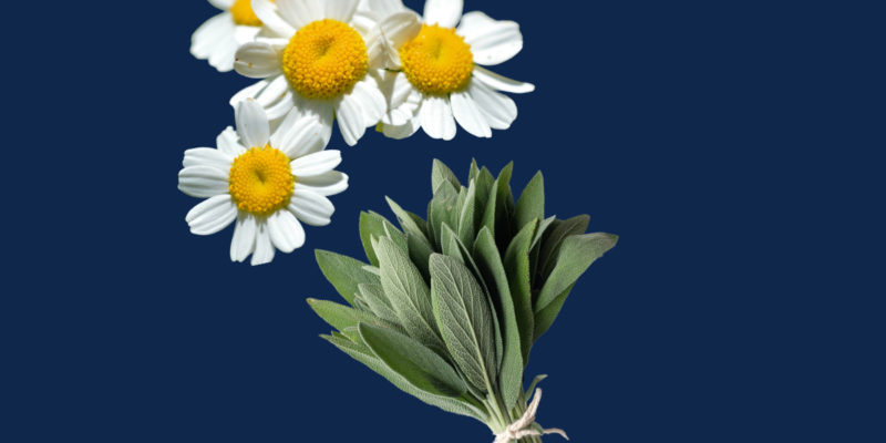 The Top 25 Herbal Remedies for Pain Relief