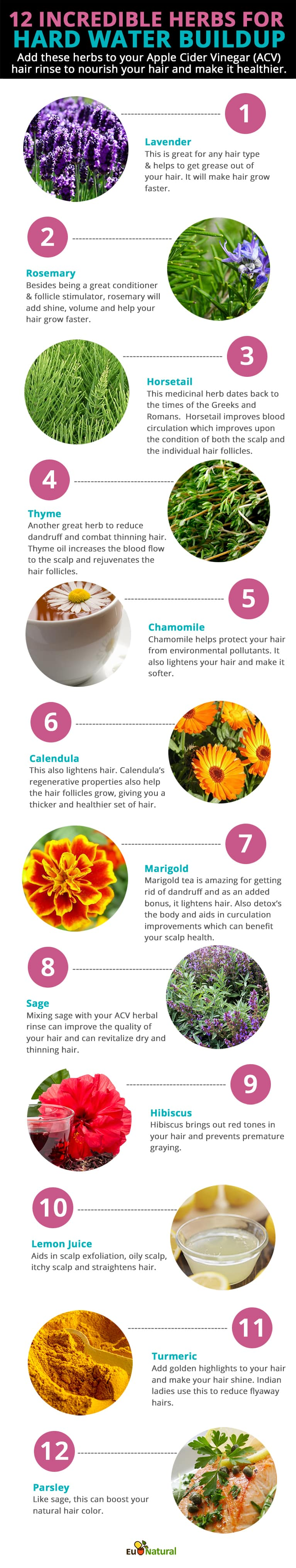 herbs-for-hard-water-buildup-infographic-final-1