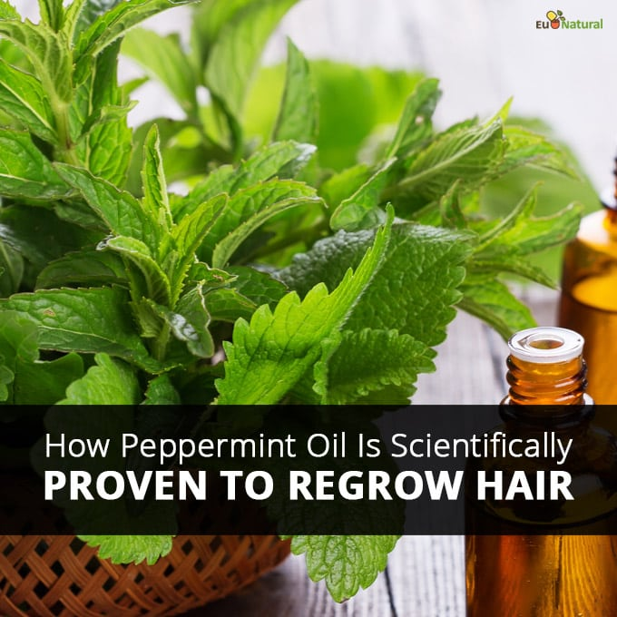 How Peppermint Oil Is Scientifically Proven To Regrow