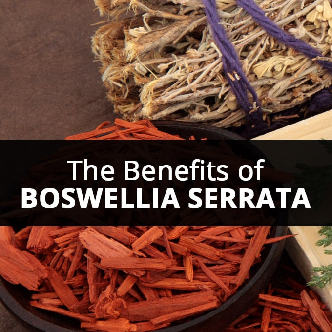 The Benefits of Boswellia Serrata Indian