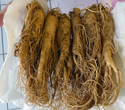red-ginseng-root